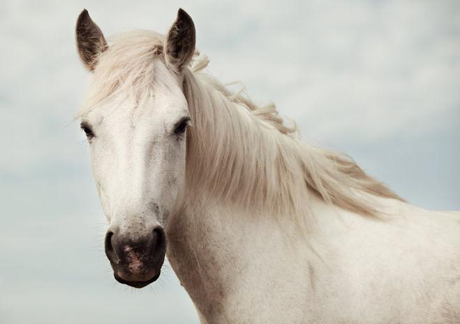 гороскоп лошадь